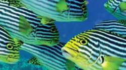 [Accommodation image]