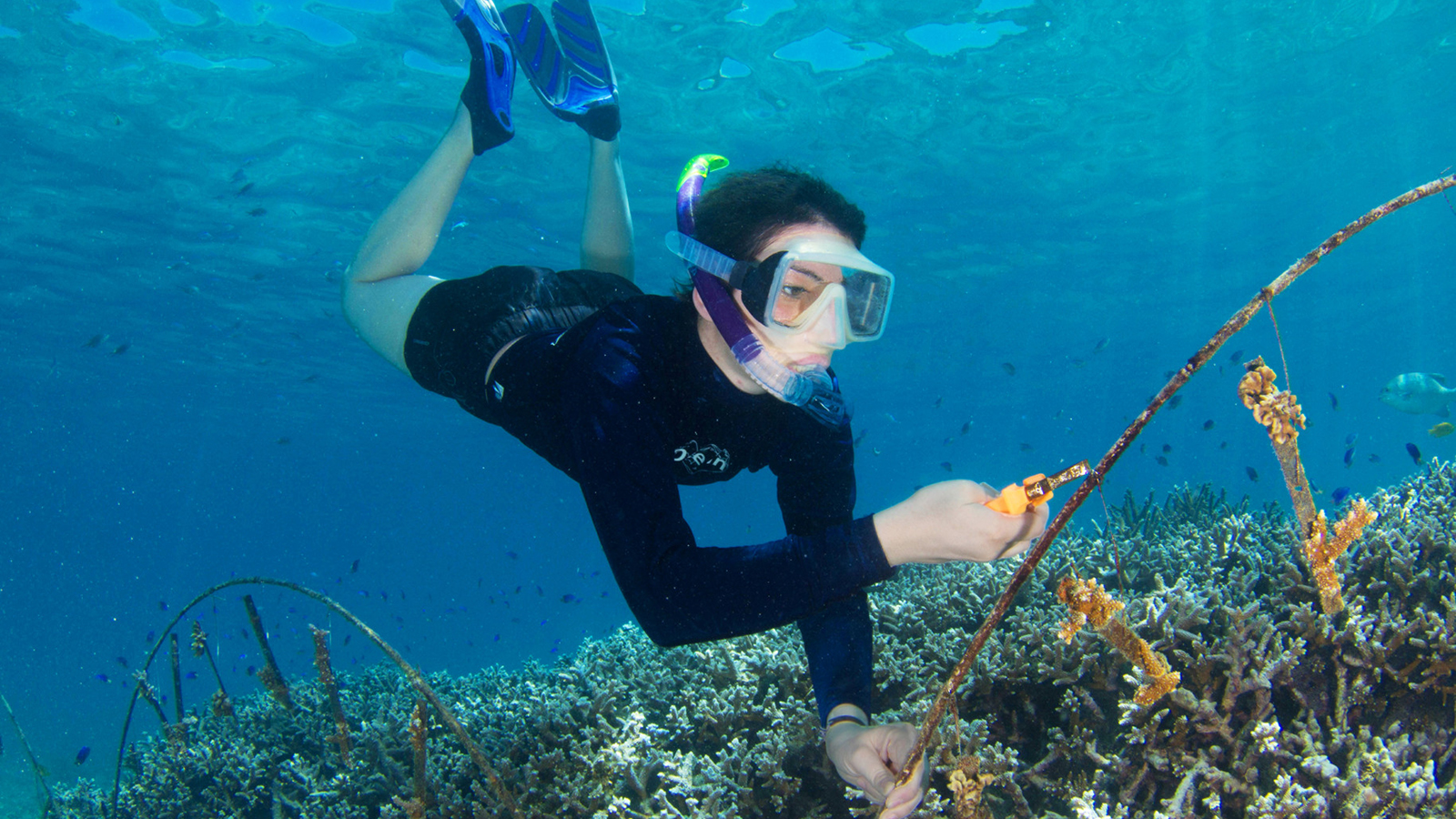 Marine edu vacation for What saltwater fish are in season now