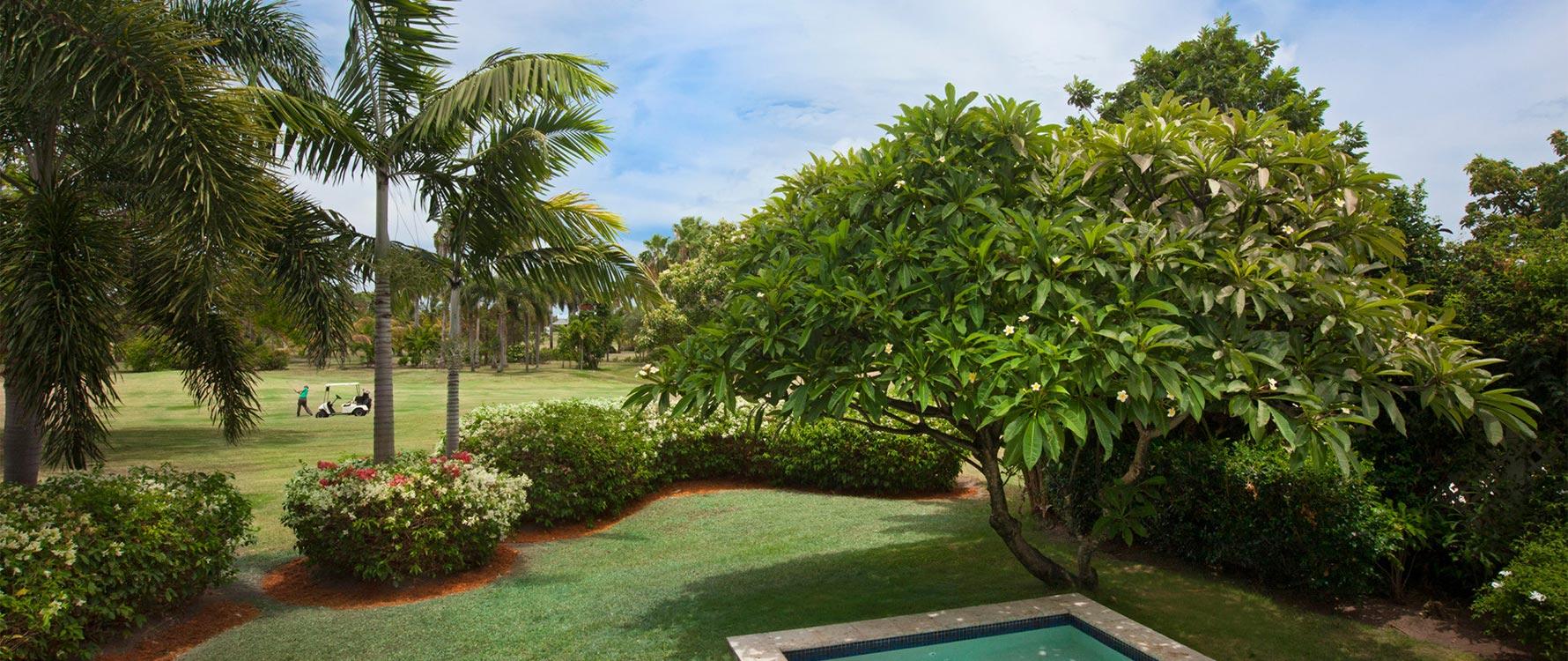 Pool and surrounding plants